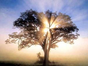 lit-up-tree-300x225
